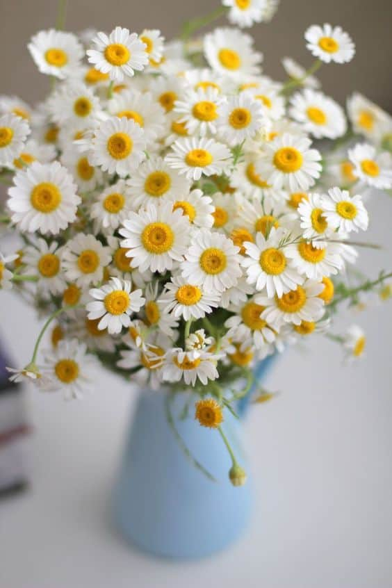 Flower Arrangement - Daisies