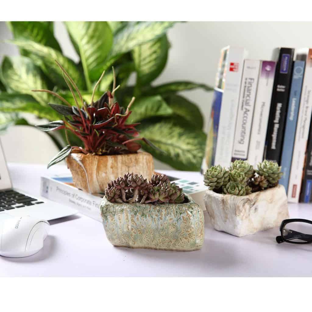 Rock Plant Pots for Succulents
