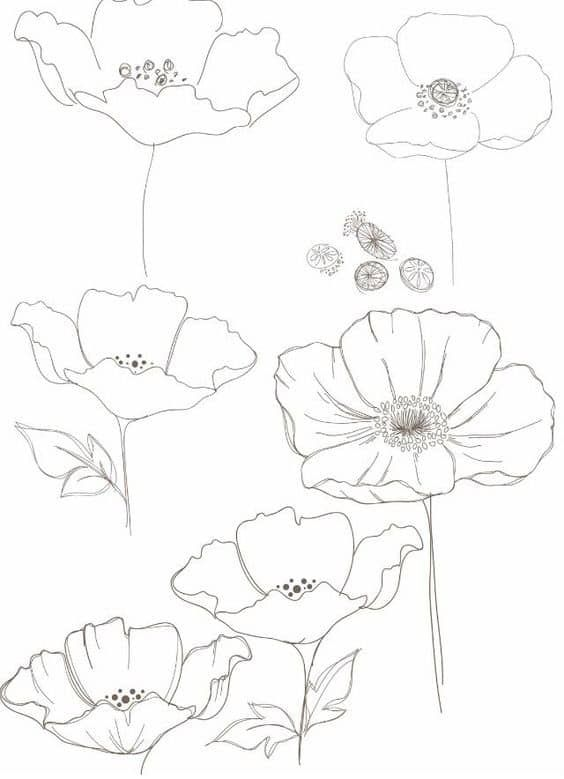 Poppy Floral Drawing