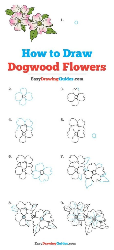 How to Draw Dogwood Flowers