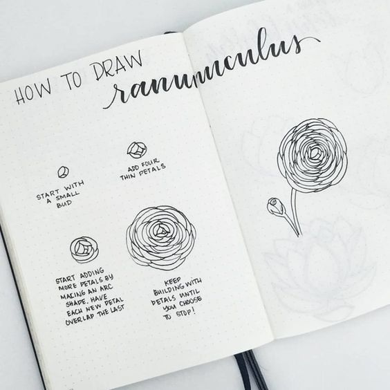 How to Draw Ranunculus Flower