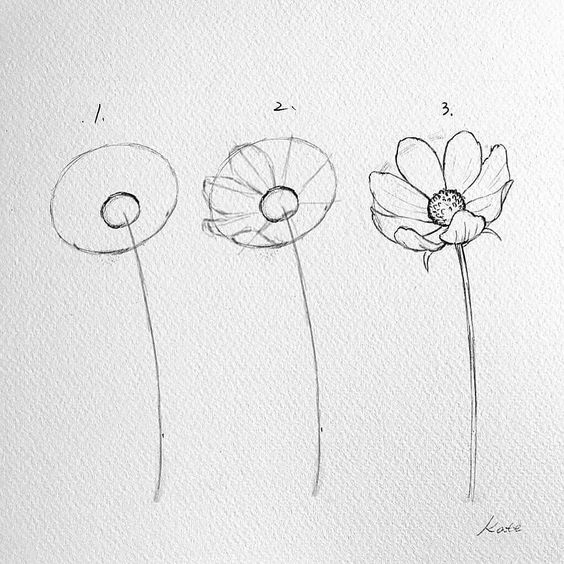 Step by Step Flower Drawing