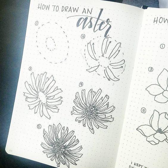How to Draw Aster Flower