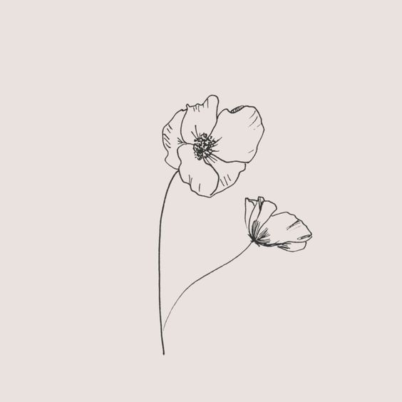 Poppy Flower Drawing