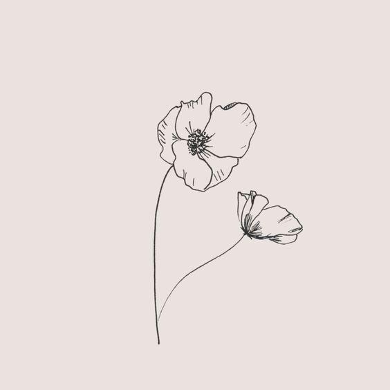 Poppy Flower Drawing