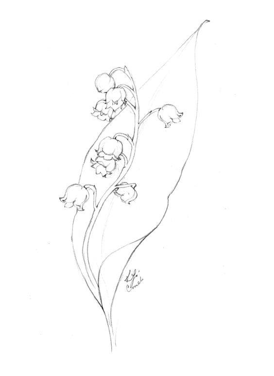Lily of the Valley Flower Drawing