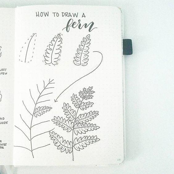 How to Draw a Fern Leaf