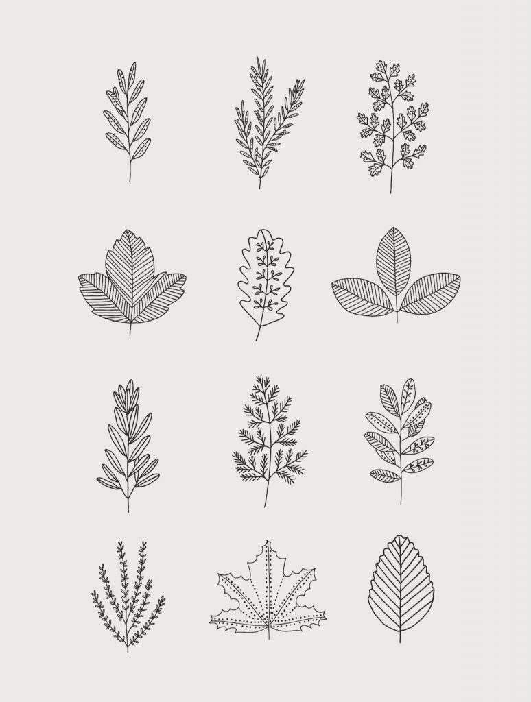 30 Ways To Draw Plants Leaves