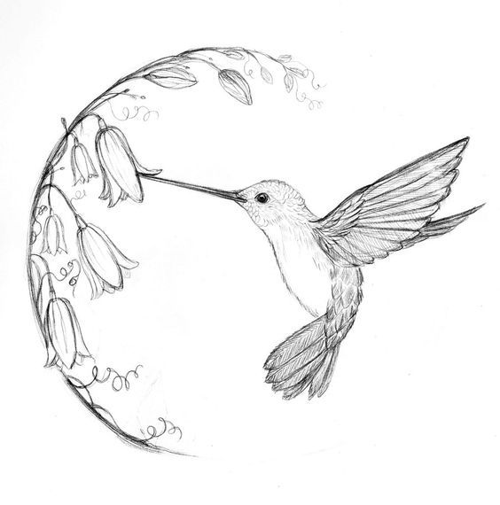 Hummingbird Drawing Idea