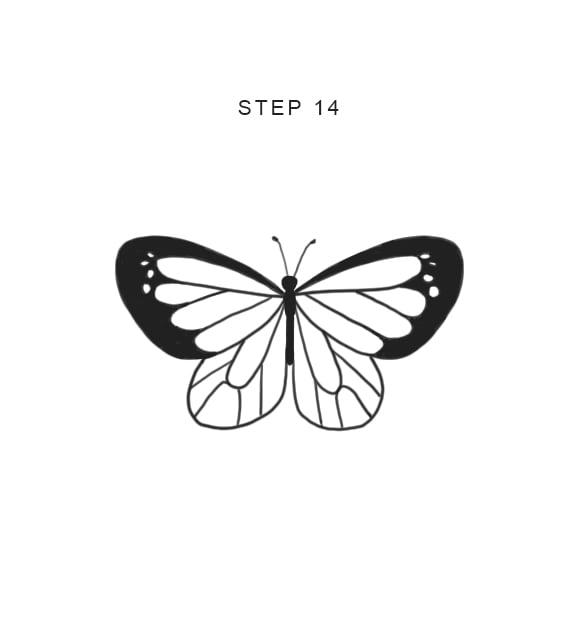 easy beginner butterfly drawing