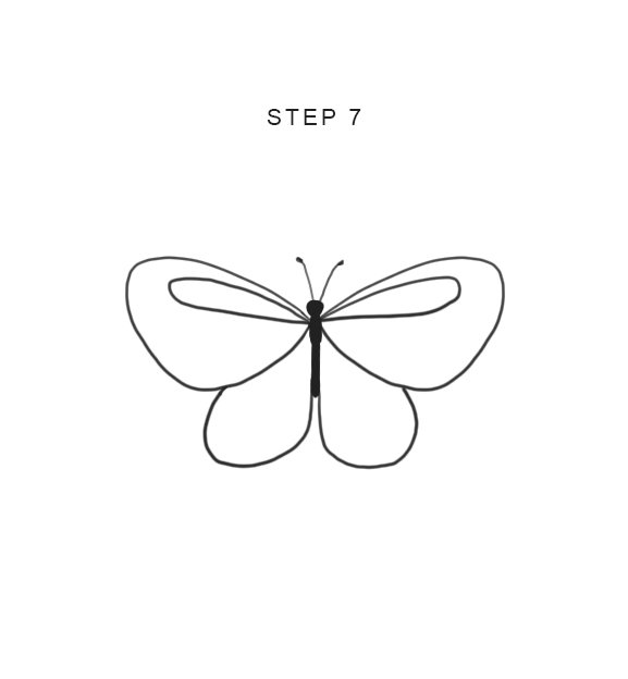 drawing butterfly