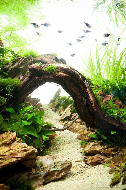 aquascaping aquarium