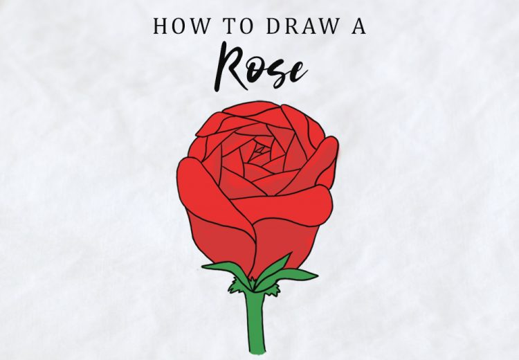 how to draw a rose easy