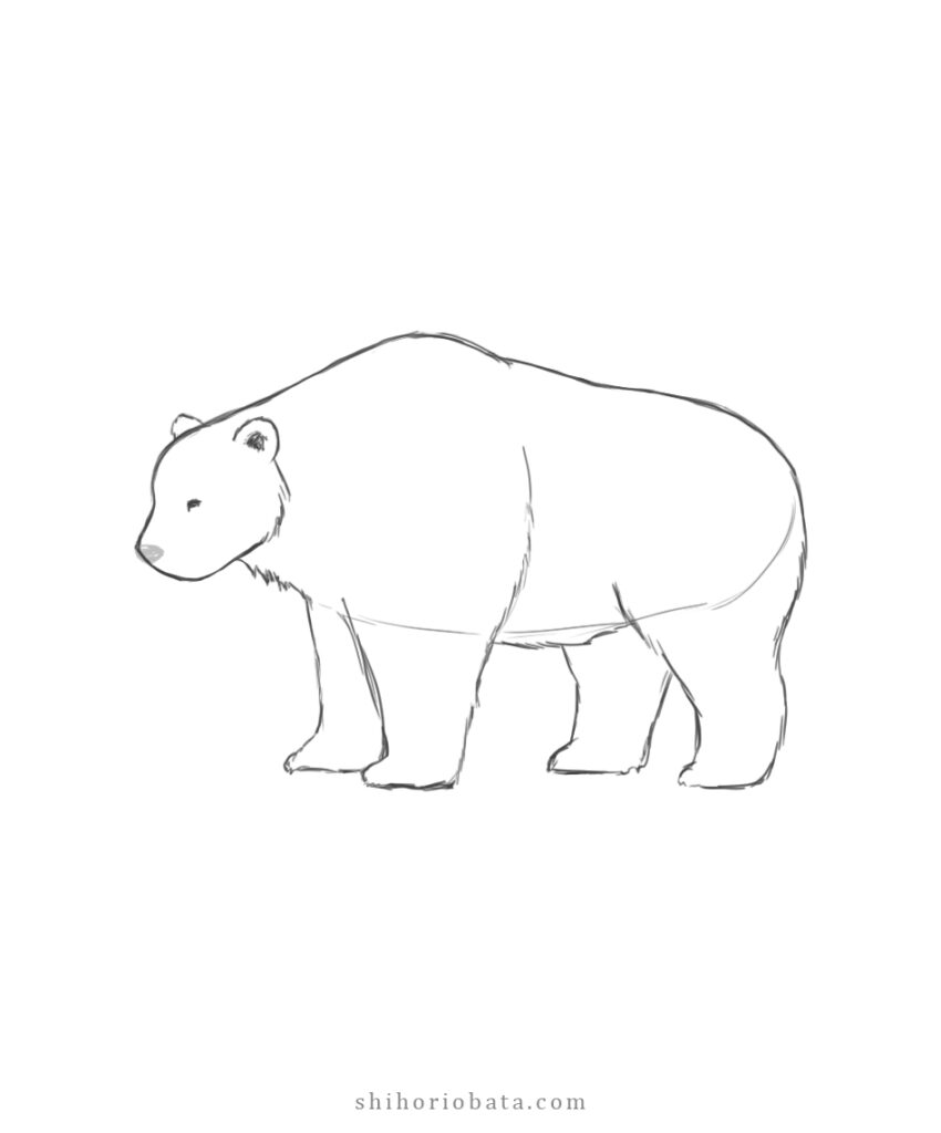 how to draw a bear tutorial