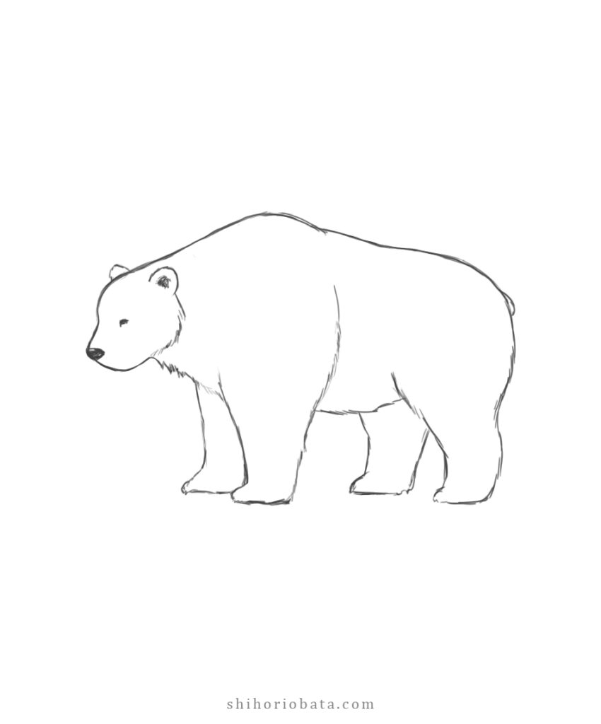 easy bear drawing step by step