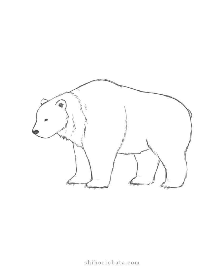 easy bear drawing