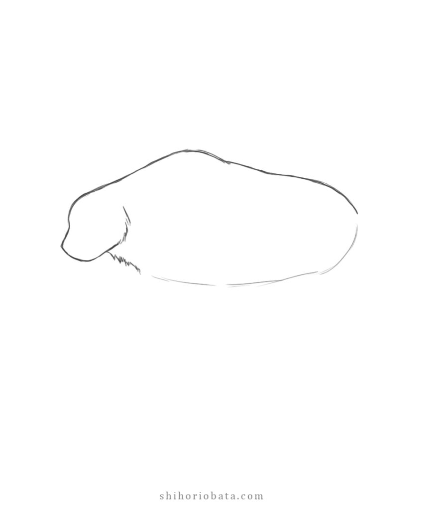 how to draw a bear