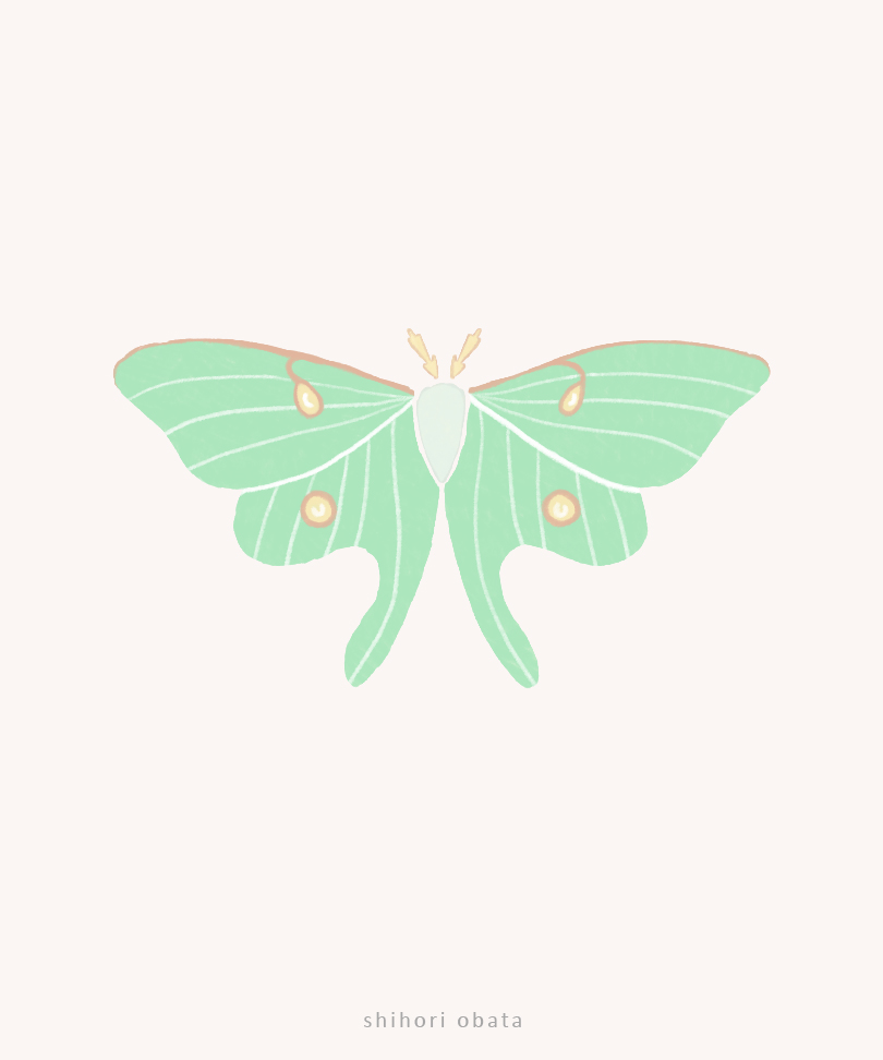 luna moth drawing art