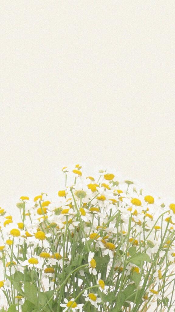 daisy wallpaper aesthetic phone