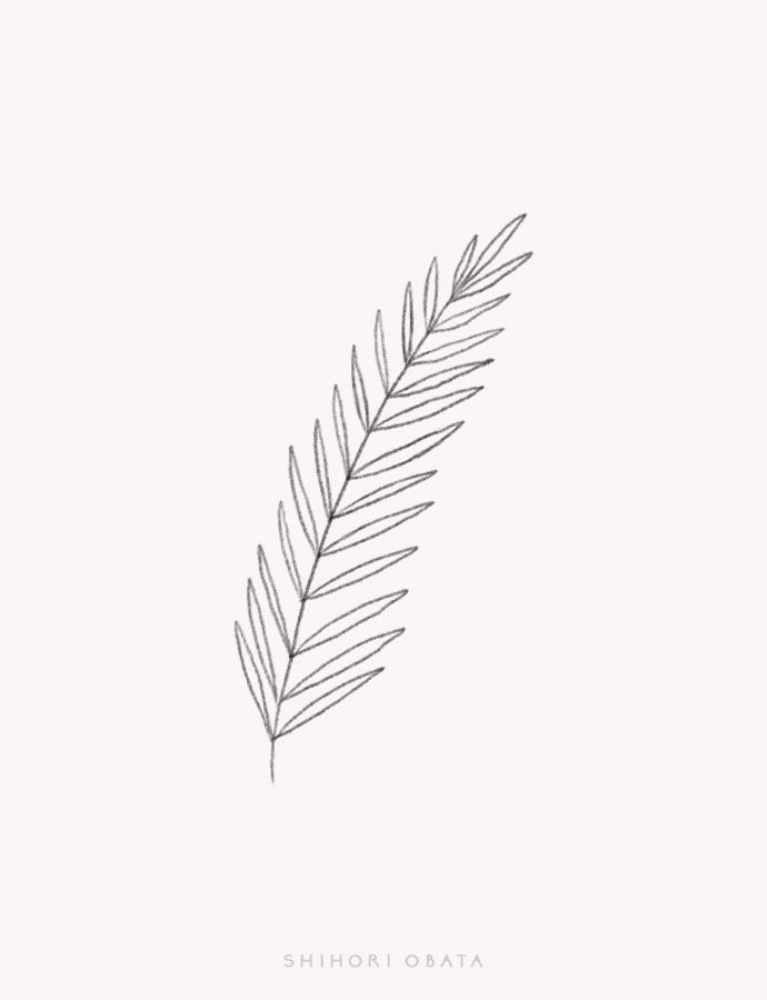 fern leaf drawing easy
