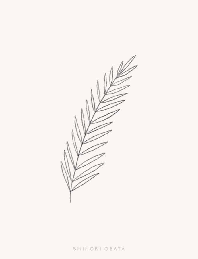 fern leaf drawing easy