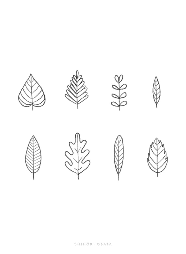 types of leaves drawing