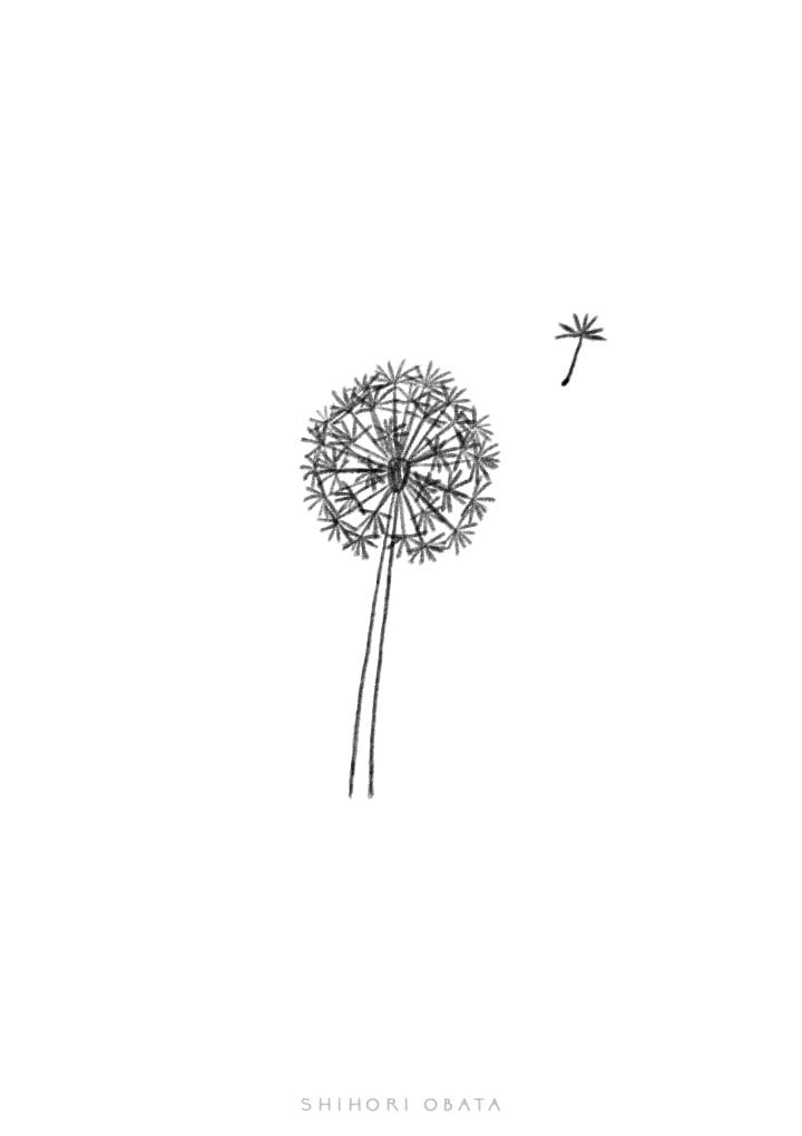 easy dandelion drawing plant
