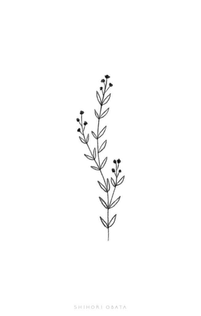 easy plant sprig drawing