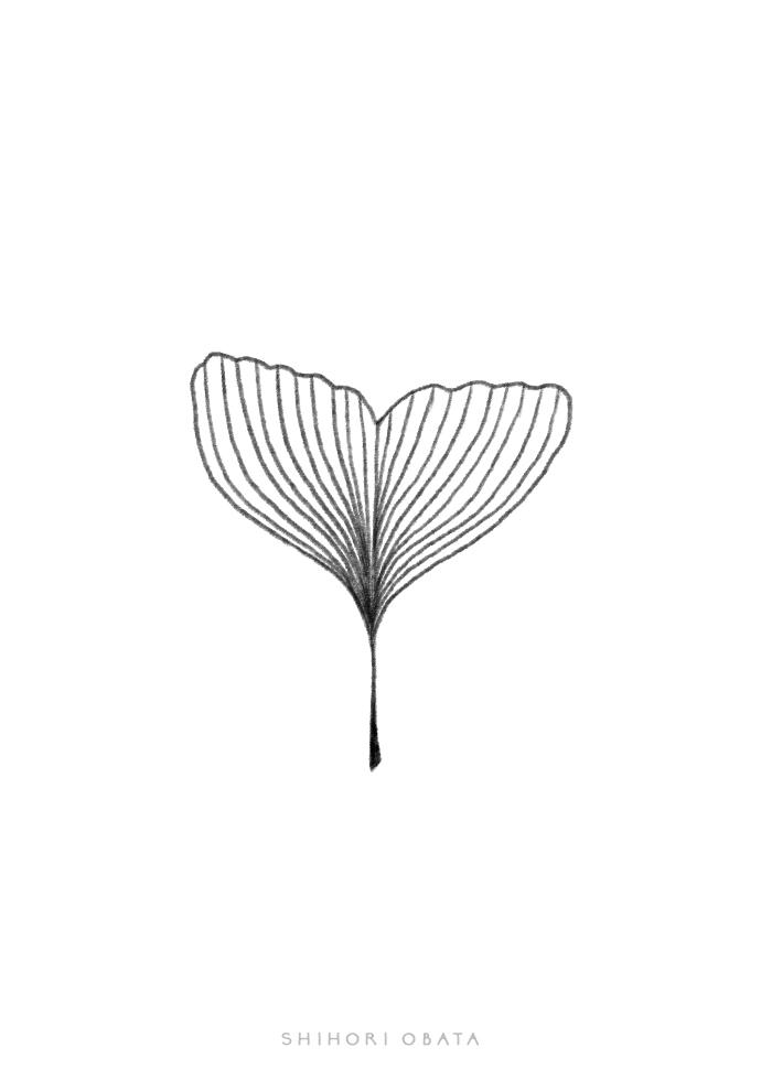 ginkgo leaf drawing