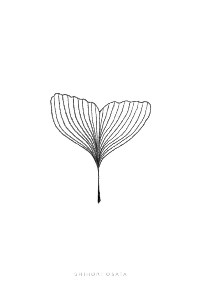 ginkgo leaf drawing