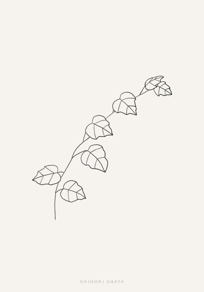 ivy drawing easy