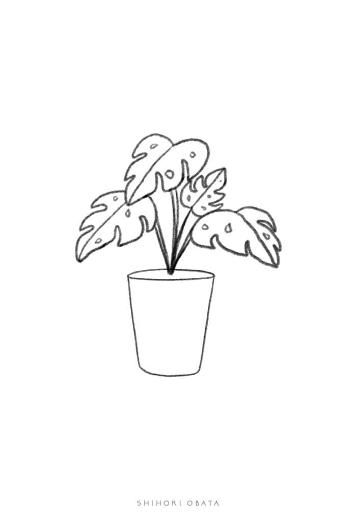 monstera plant drawing