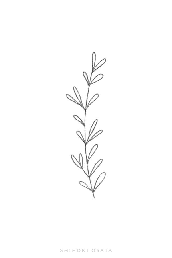 simple leaf drawing