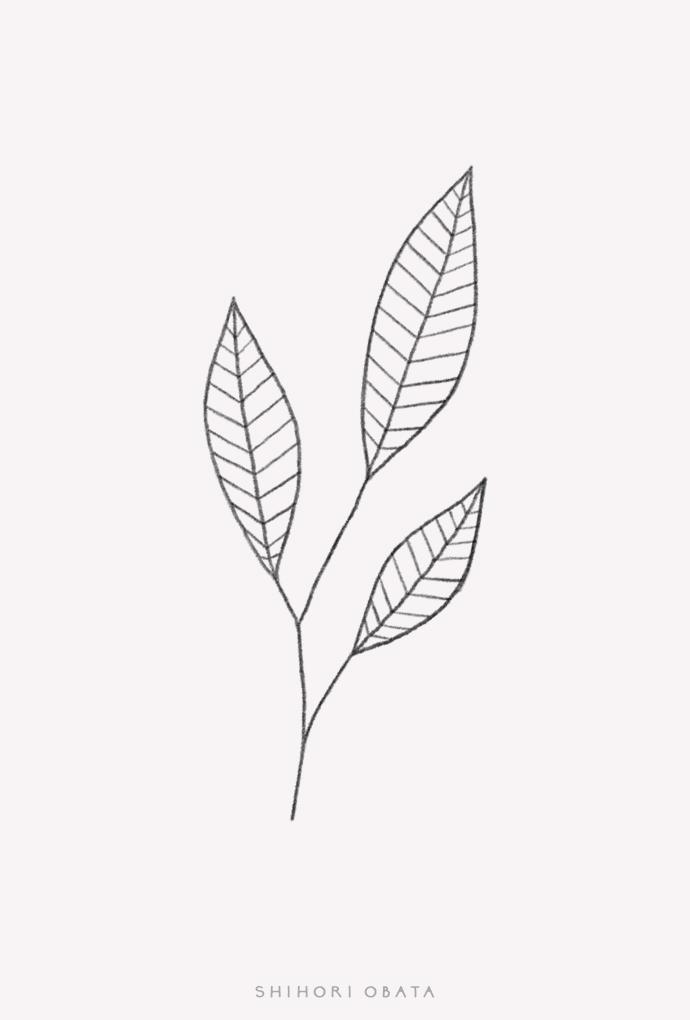 simple easy leaf drawing