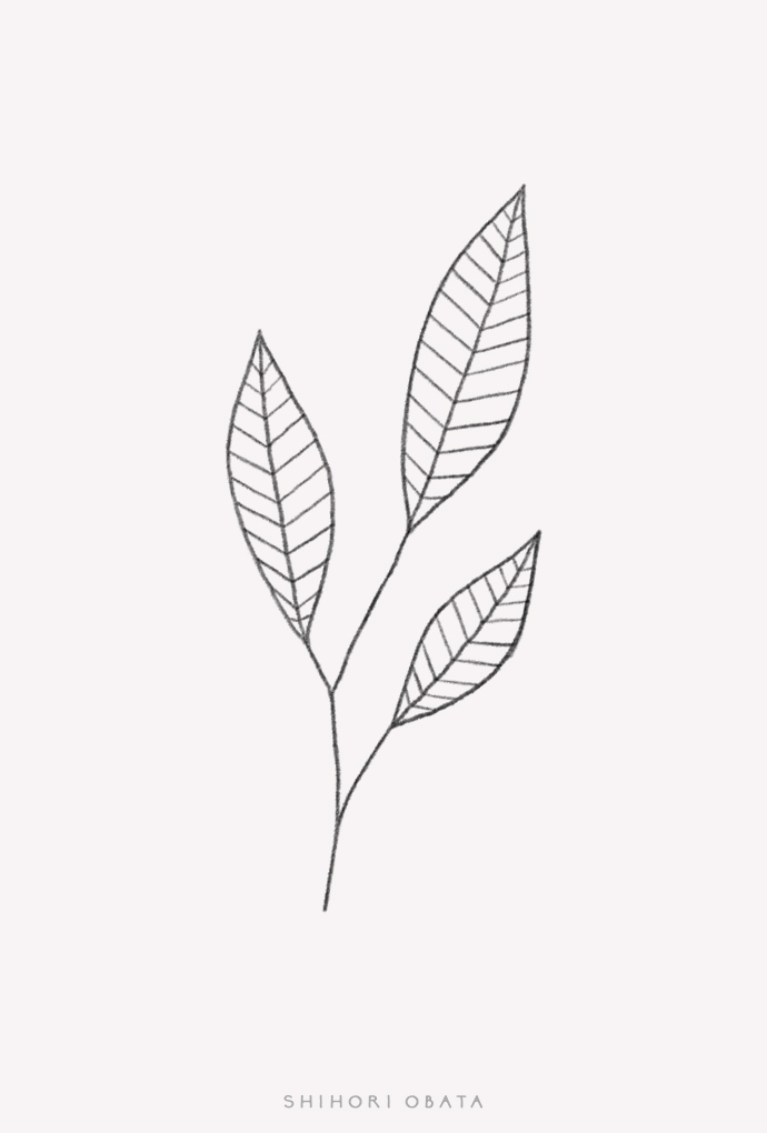 simple easy leaf drawing