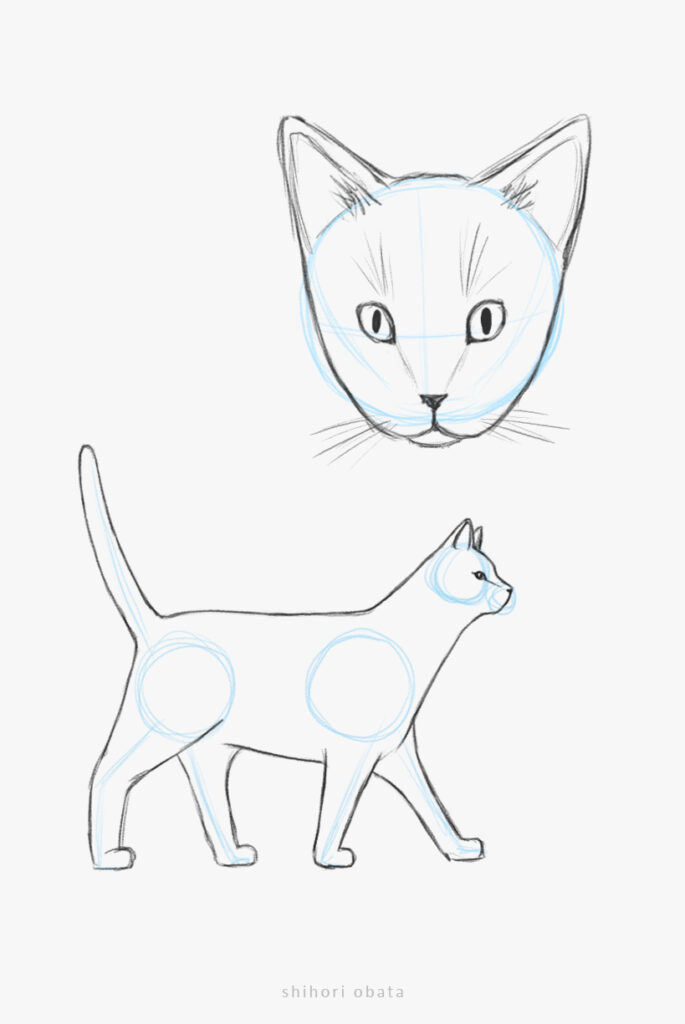 realistic cat drawing easy